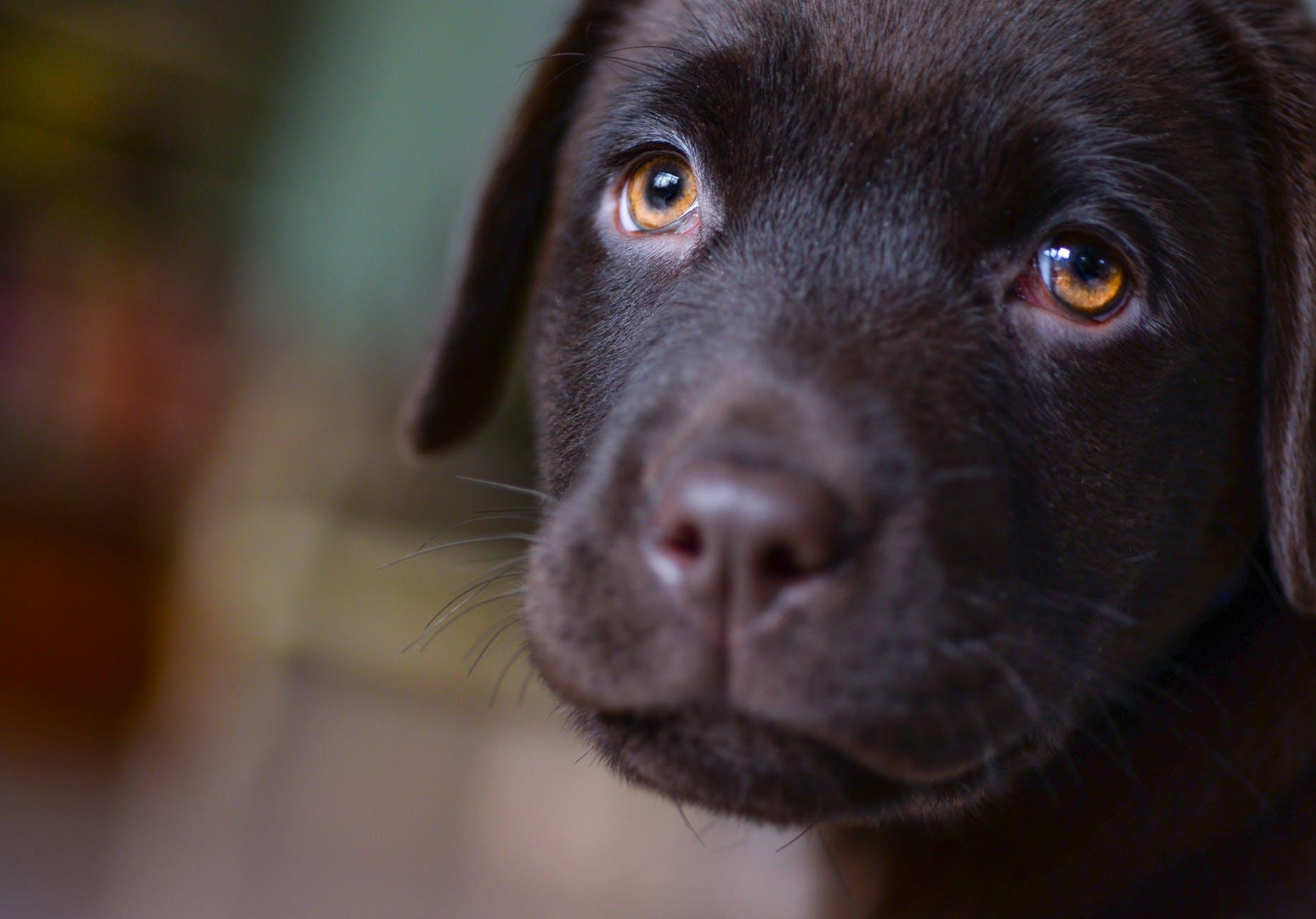 adorable animal blur breed